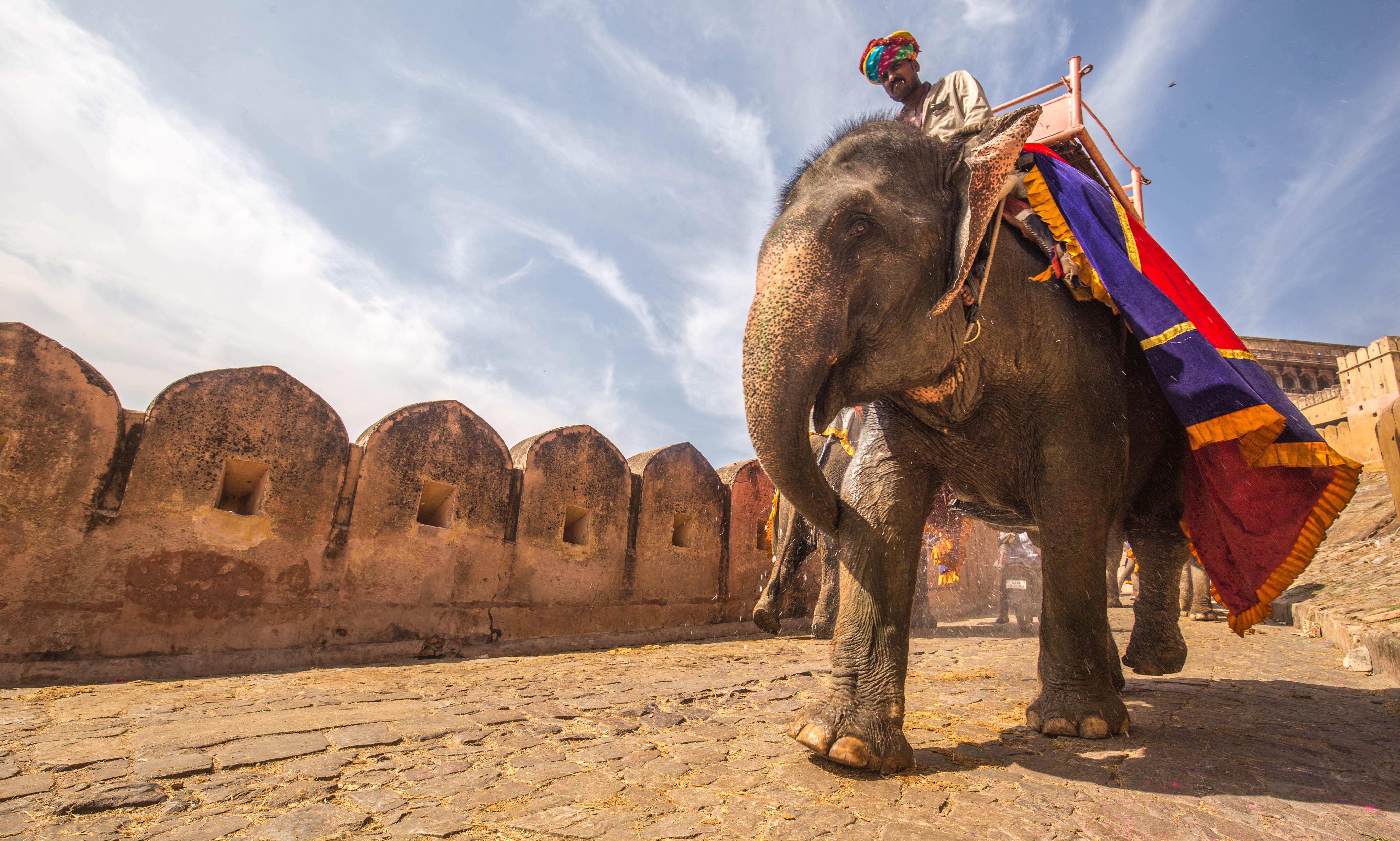 L'Inde - Un homme sur un éléphant