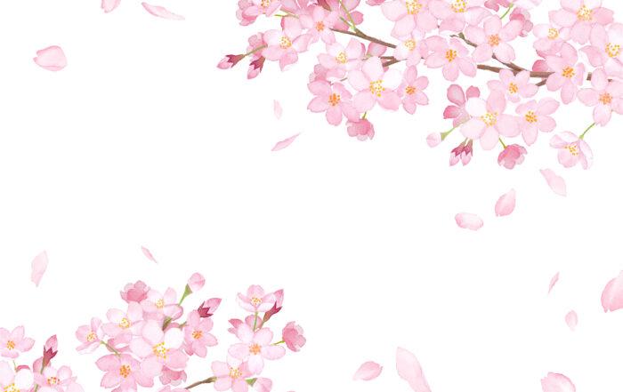 Fleurs roses au printemps